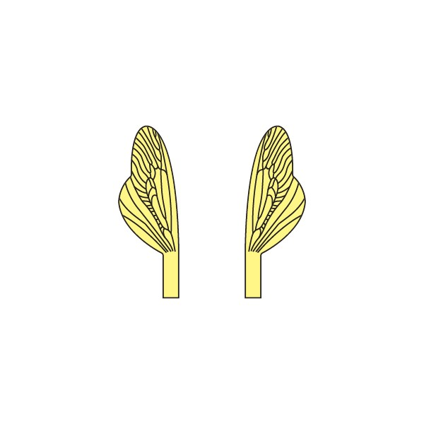 Wings of Spent Caddisfly and Stonefly <br /> Yellow