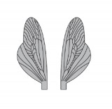 Wings of Spent Caddisfly and Stonefly <br /> Grey