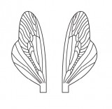 Wings of Spent Caddisfly and Stonefly <br /> Neutral